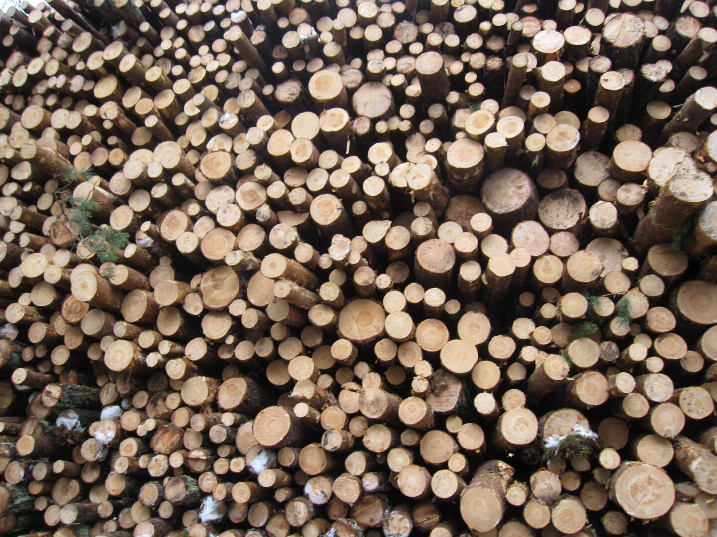 Veneer can be made from whichever wood when you have suitable machines for it.